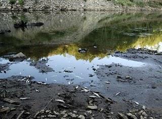 truchas muertas rio ulla