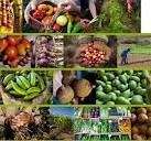 agroecologia2